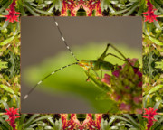 Bromeliad Posters - Bromeliad Grasshopper Poster by Bell And Todd