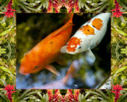 Flower Photos Framed Prints - Bromeliad Koi Framed Print by Bell And Todd