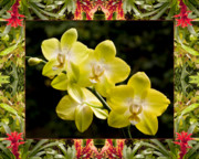 Flower Photos Framed Prints - Bromeliad Orchids Framed Print by Bell And Todd