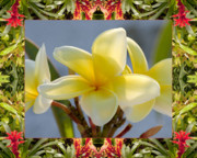 Flower Photos Framed Prints - Bromeliad Plumeria Framed Print by Bell And Todd