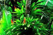 Tropical Rainforest Framed Prints - Bromeliads El Yunque National Forest Framed Print by Thomas R Fletcher