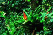 Bromeliads El Yunque  Print by Thomas R Fletcher