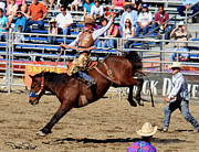 Riding Originals - Bronc Riding by David Salter