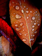 Bronzed Posters - Bronzed Leaf Poster by The Forests Edge Photography - Diane Sandoval