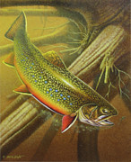 Fly Fishing Painting Posters - Brook Trout Cover Poster by JQ Licensing