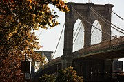 Road Travel Framed Prints - Brooklyn Bridge In Autumn Framed Print by Design Pics / Darren Greenwood