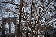 City Scape Digital Art Originals - Brooklyn Bridge Thru The Trees by Rob Hans