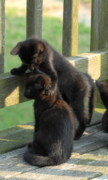 Black Cat Photos Photos - Brotherly Love by Joyce StJames
