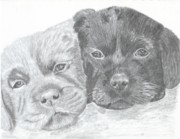 Puppies Drawings Posters - Brothers Poster by DebiJeen Pencils