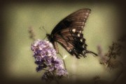 Butterfly On Flower Prints - Brown and Beautiful Print by Sandy Keeton
