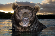 Brown Bear Ursus Arctos In River Print by Sergey Gorshkov