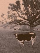 Cow Digital Art Originals - Brown Cow by David A Brown