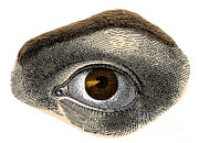 Sight See Prints - Brown Eye Print by Science Source