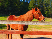 Backroad Digital Art Prints - Brown Horse Behind Fence . Painterly Print by Wingsdomain Art and Photography