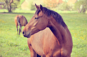Grazing Horse Photo Posters - Brown Horse Poster by Euge de la Peña