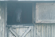 Horse Barn Photos - Brown Horse In A Barn In The Fog by Todd Gipstein