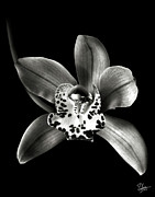 Flower Photos Posters - Brown Orchid in Black and White Poster by Endre Balogh