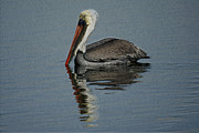 Shore Birds Photos - Brown Pelican 2 by Ernie Echols
