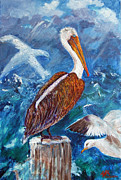 Doris Blessington - Brown Pelican with Gulls