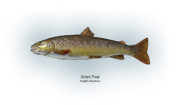 Sports Drawings Prints - Brown Trout Print by Ralph Martens