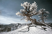 Ir Prints - Bryce Canyon Infrared Tree Print by Mike Irwin