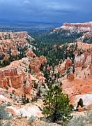 Summer Storm Posters - Bryce Canyon Storm Poster by Gary Whitton