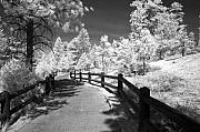 Infrared Photos - Bryce Canyon Trail by Mike Irwin