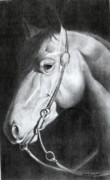 Western Pencil Drawing Framed Prints - Bubba Framed Print by David Ackerson