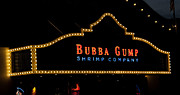Bubba Metal Prints - Bubba Gump Metal Print by Malania Hammer