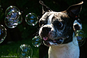 Frisky Photo Posters - Bubble Monster Poster by Susan Herber