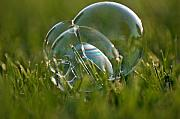 Grass Reflection Framed Prints - Bubbles in the Grass Framed Print by Shawn Wood