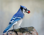 Bluejay Metal Prints - Bubbles Metal Print by Jan Piller