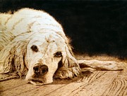 Dogs Pyrography Posters - Buck Poster by Adam Owen