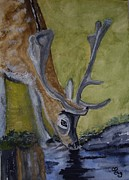 Deer Drinking Water Posters - Buck at Bushy Park Poster by Carole Robins