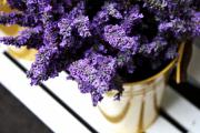 Lavender - Bucket of Lavender by Cathie Tyler
