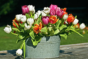 Tulips Framed Prints - Bucket of Tulips Framed Print by Mark Christian