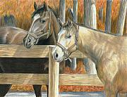 Fence Drawings Framed Prints - Bucks Pal Framed Print by Carla Kurt