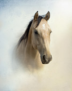 Quarterhorses Posters - Buckskin Beauty Poster by Betty LaRue