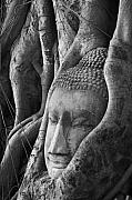 Thailand Photos - Buddha head by Jessica Rose