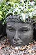 A Hot Summer Day Metal Prints - Buddha on a hot summer island day Metal Print by Brian Sereda