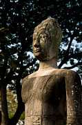 Tempel Prints - Buddha staue resting under a tree in Aytthaya. Print by Ulrich Schade