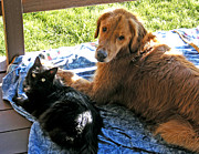 Goldens Prints - Buddies on the Porch Print by Kara Kincade