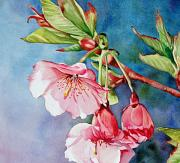 Cherry Blossoms Painting Metal Prints - Budding Blossoms Metal Print by Diane Fujimoto