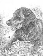 Retrievers Drawings - Buddy by Lawrence Tripoli