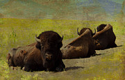 Katherine Worley - Buffalo at Rest