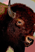 Bison Art - Buffalo Bull by Jan Amiss Photography