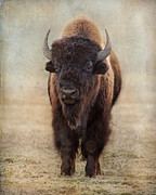 Bison Digital Art - Buffalo Bull by Judy Neill