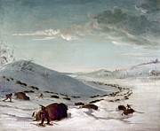 Great Plains Painting Posters - Buffalo Chase In Winter Poster by Granger