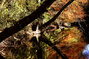 Riverscape - Early Autumn Prints - Buffalo Creek Print by Nina Fosdick