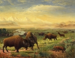 Buffalo Framed Prints - Buffalo Fox Great Plains American americana historic oil painting  Framed Print by Walt Curlee